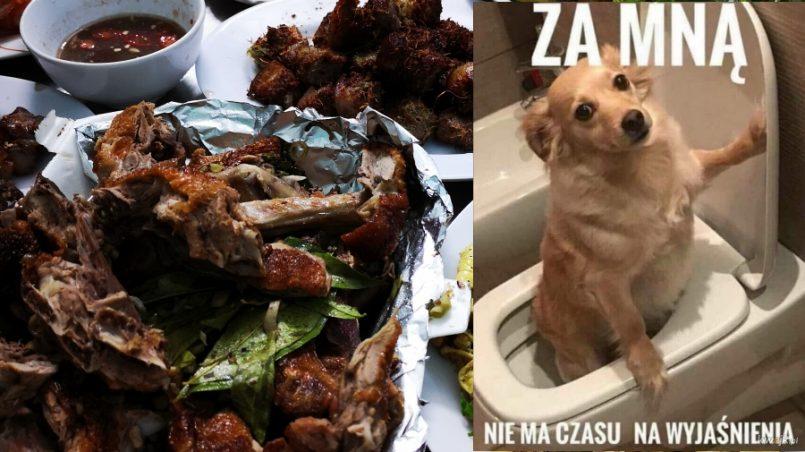 jedzenie psow w wietnamie